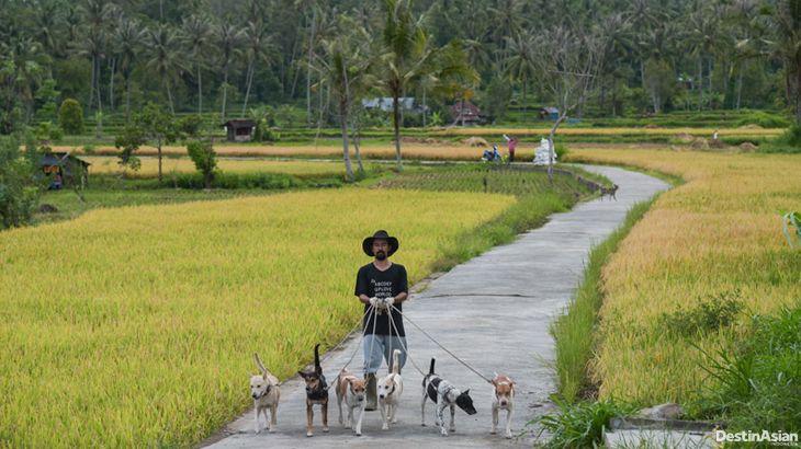 Tradisi Berburu Babi di Minangkabau