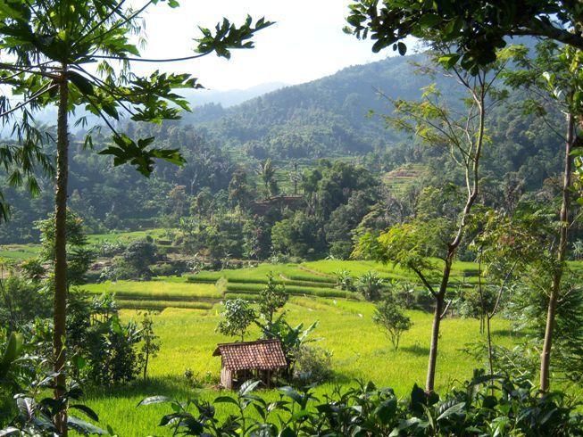 """Cara Interaksi Orang Jawa dengan """"Penunggu"""" Sawah"""