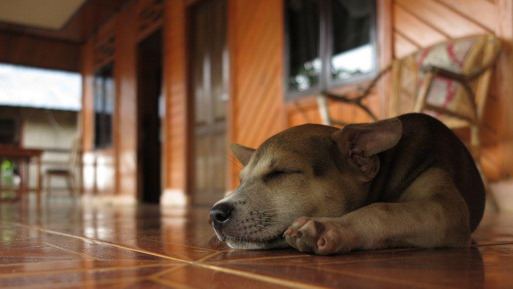 Sisi Lain dari Solo: Maraknya Perdagangan Daging Anjing